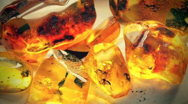 Лечебные свойства окаменевшей смолы известны давно