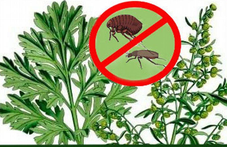 Народные средства для избавления от насекомых