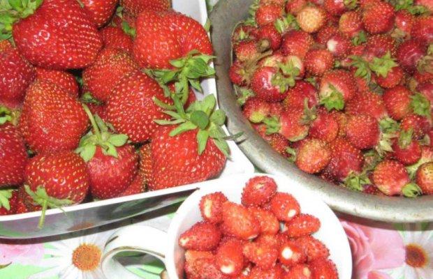 Плоды садовой земляники (клубники) и лесной земляники
