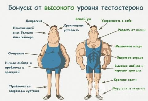 Низкий уровень тестостерона у мужчин приводит к снижению жизненного тонуса и ожирению