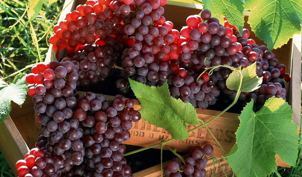 Полезные свойства винограда.