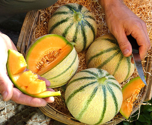 Один из низкокалорийных плодов