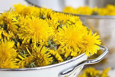Цветки одуванчика