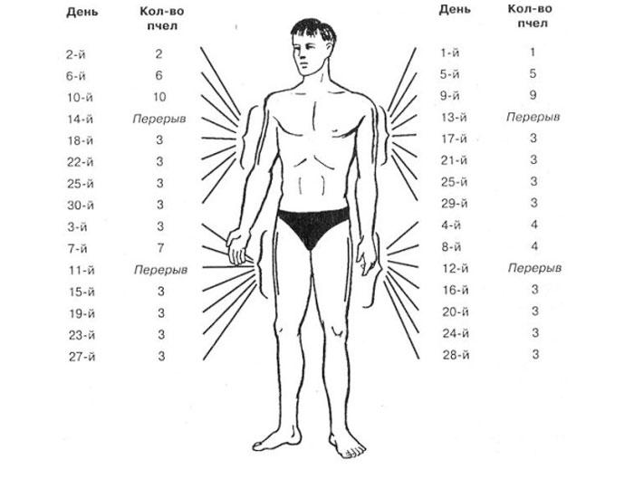 Апитерапия точки укусов