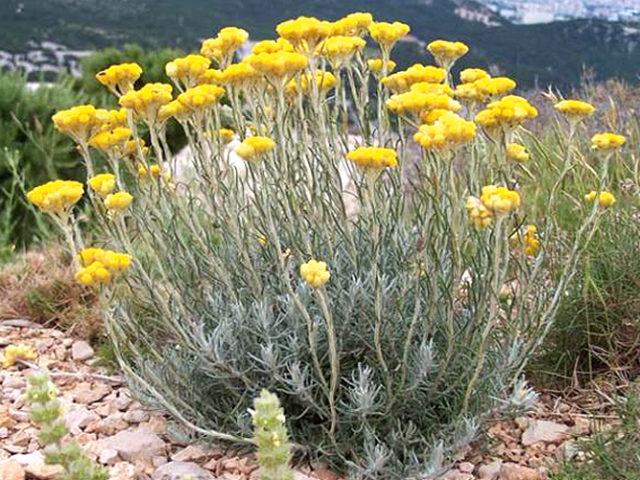 Лечебные свойства травы и цветков