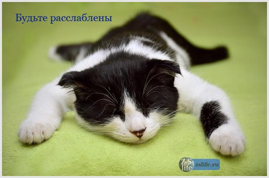Расслабленная кошка