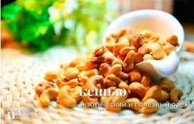 Кешью – экзотический и полезный орех