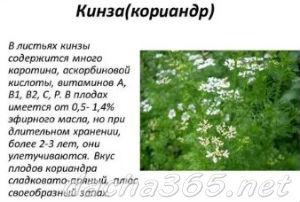 кинза3