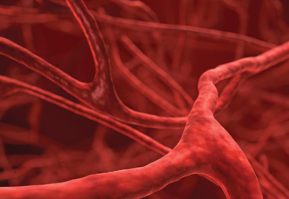 кровеносные сосуды