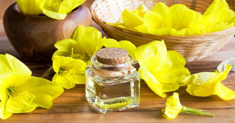 Масло примулы вечерней - польза и вред при климаксе