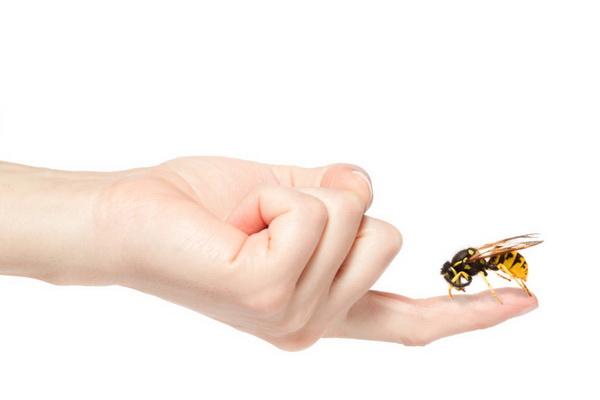 Пчела села на палец