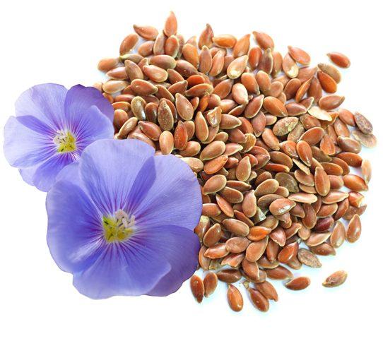 Полезные свойства семян льна и льняного масла