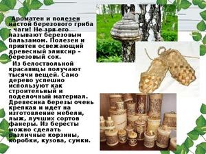 Показания к применению гриба