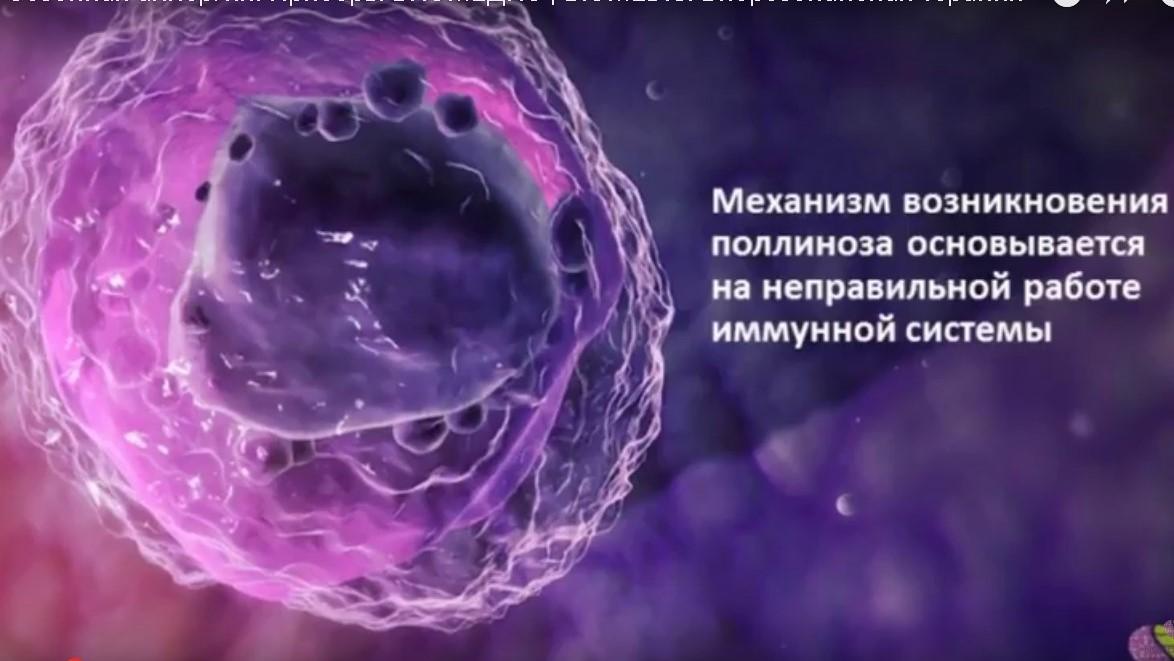 Механизм возникновения поллиноза