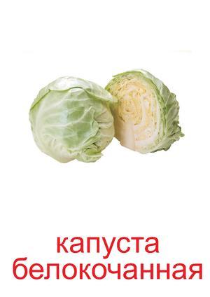 Польза белокочанной капусты для мужчин