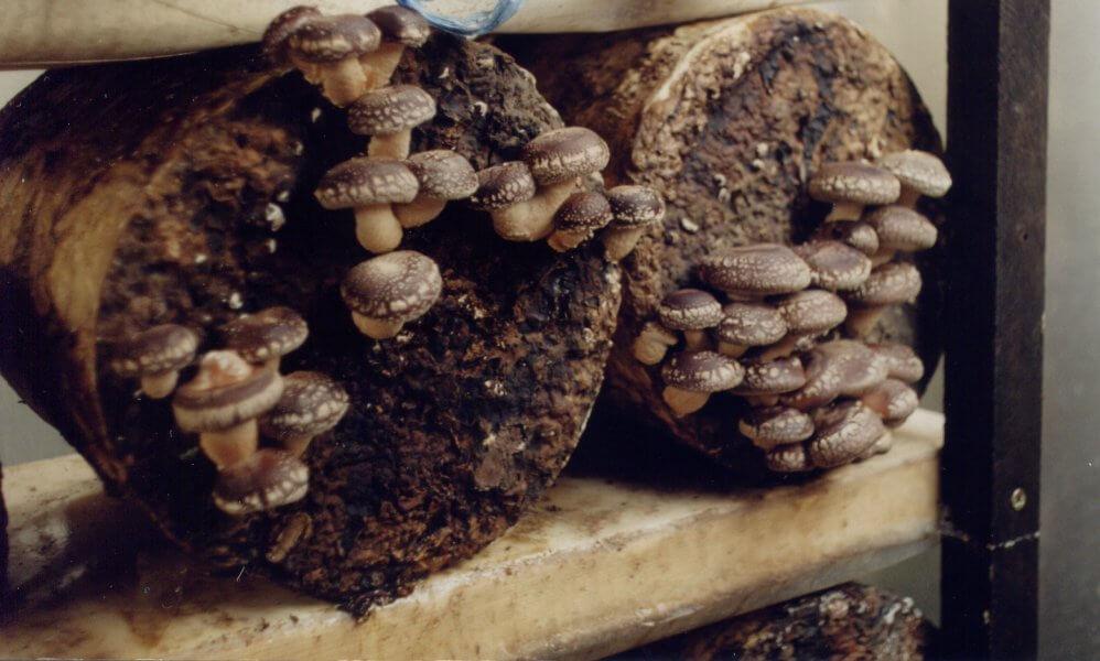 Выращивание гриба