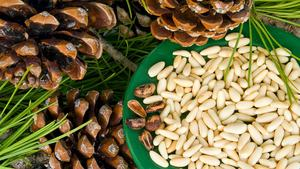 Сибирский кедровый орех фото