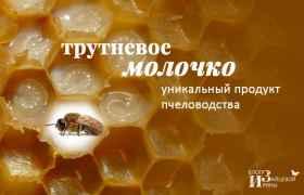 Трутневое молочко - уникальный продукт пчеловодства