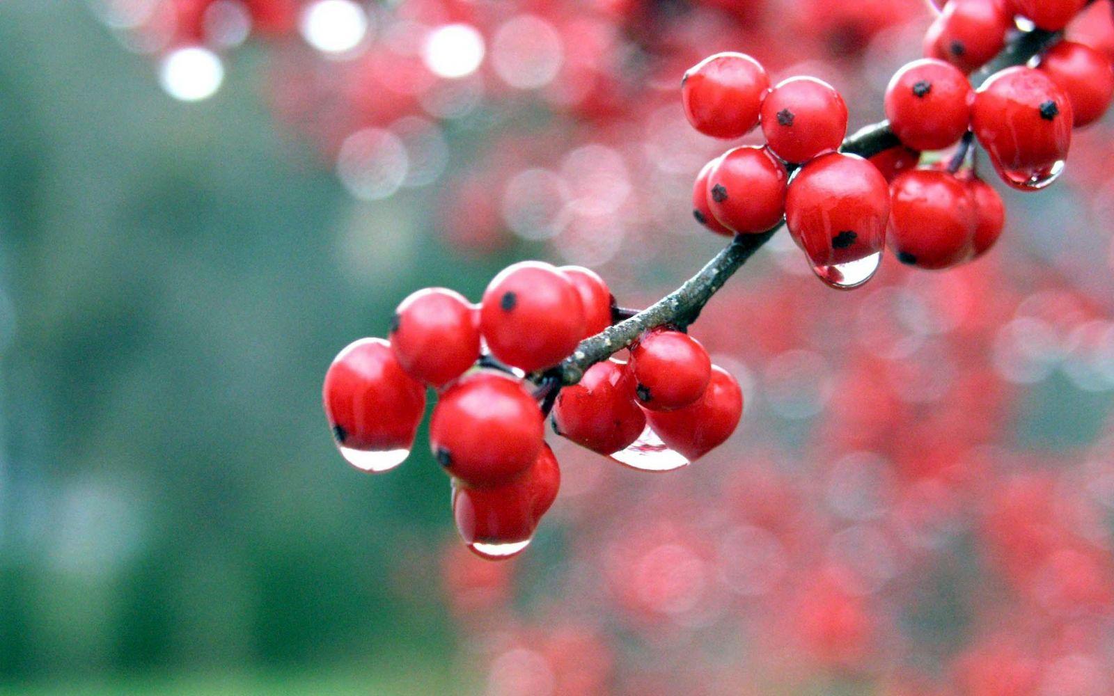 Калина — эффективное и очень вкусное целебное средство