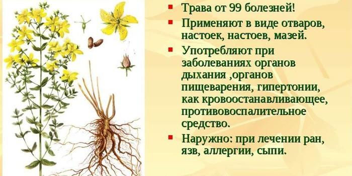 Лечебные действия травы