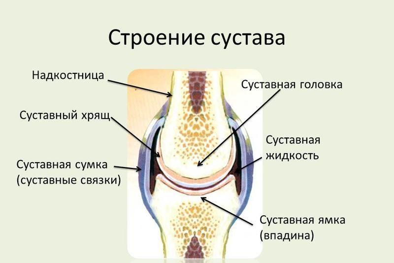 Из чего состоит сустав
