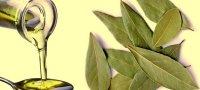 Лавровое масло: свойства и применение в медицине и косметологии