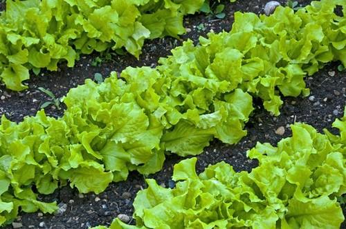 Полезный лечебный салат