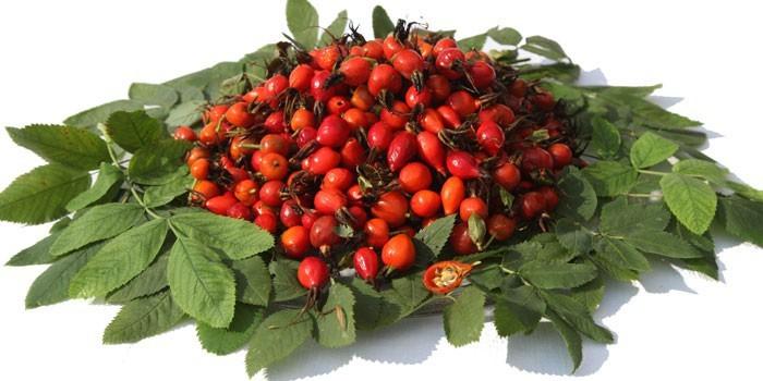 Плоды и ветки шиповника