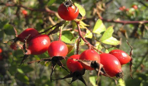 лечение розацеа народными средствами-косметические масла