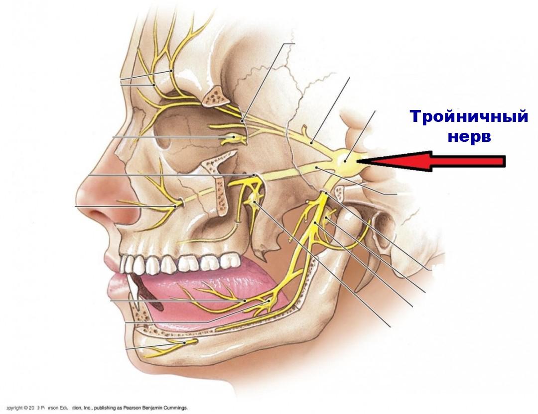 тройничный нерв схема