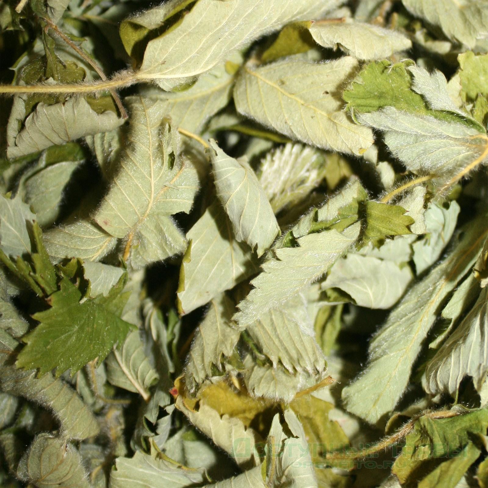 Сушеные листья клубники