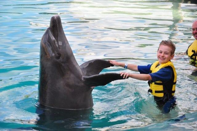 Зоотерапия с дельфином