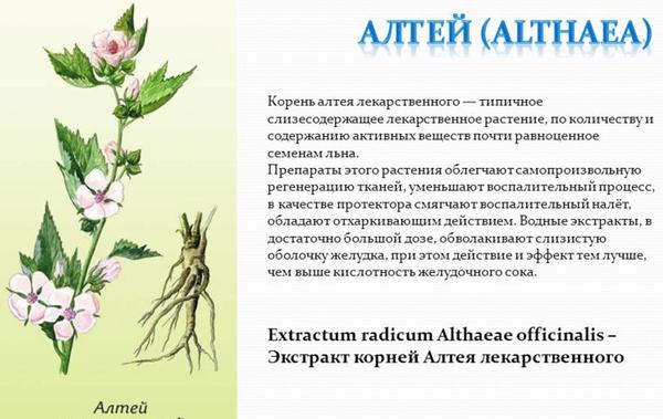 Корень алтея лекарственного