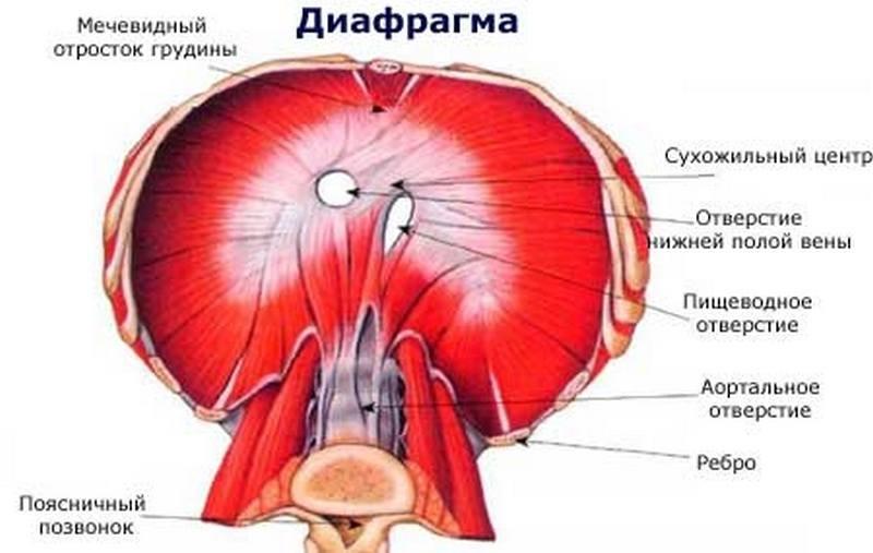 Спазм диафрагмы