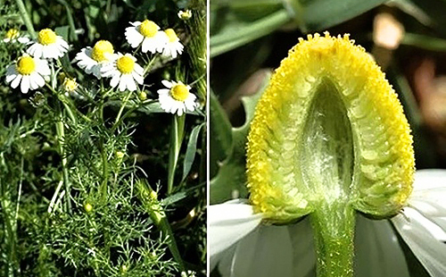 Интересный вид на цветок в срезе