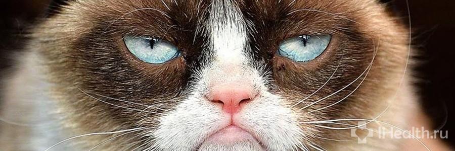 Котики из интернета поднимают настроение